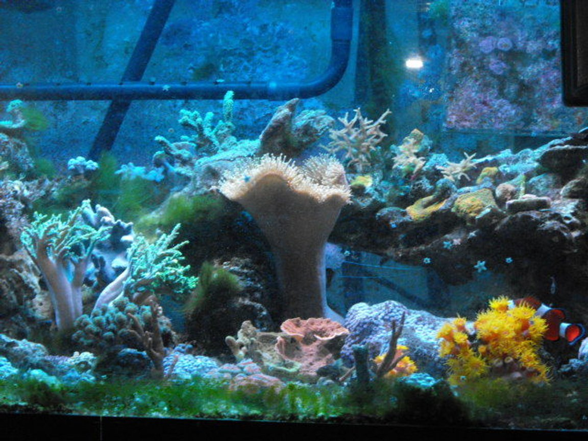 45 gallons reef tank (mostly live coral and fish) - Bit of everything.