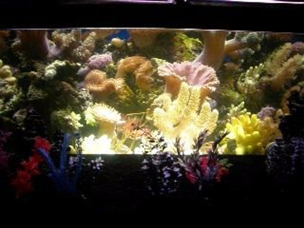 90 gallons reef tank (mostly live coral and fish) - costume background i created