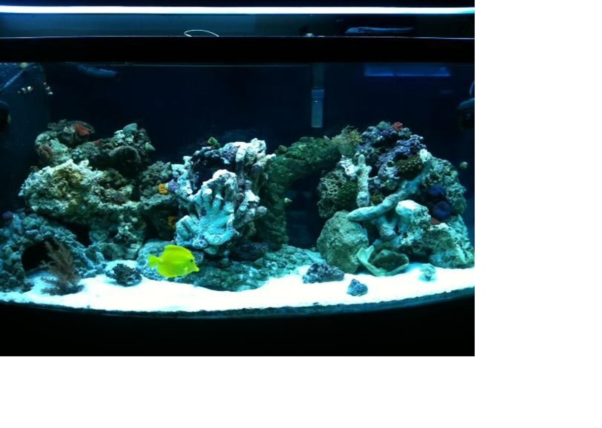 75 gallons reef tank (mostly live coral and fish) - 75 gallon saltwater reef tank