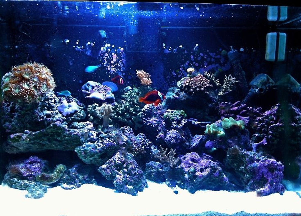 65 gallons reef tank (mostly live coral and fish) - 65 gallon reef tank