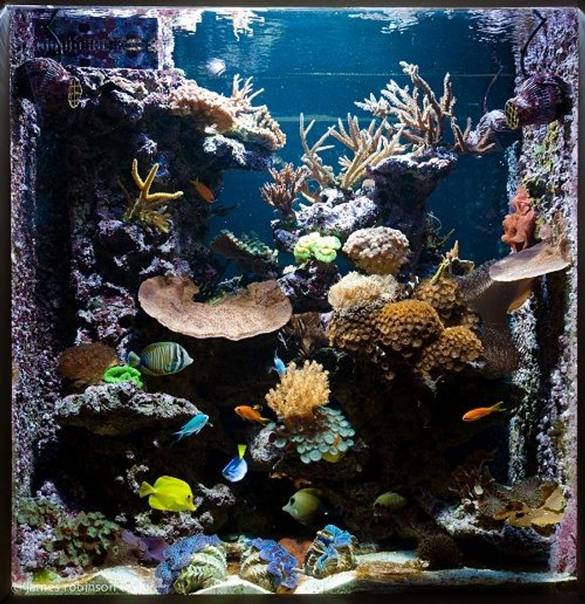 125 gallons reef tank (mostly live coral and fish) - 125 gallon see through reef aquarium.