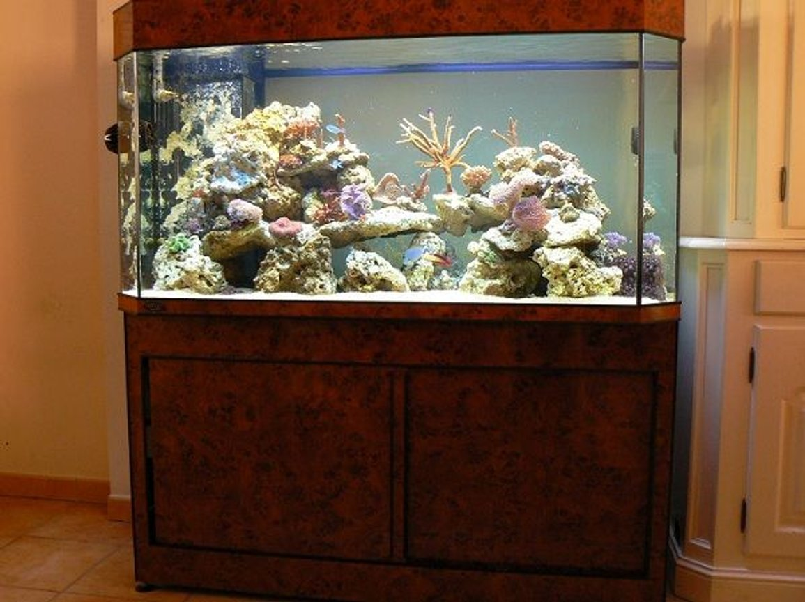 125 gallons reef tank (mostly live coral and fish) - Deltec 500 liter panoramic 3 monts running.