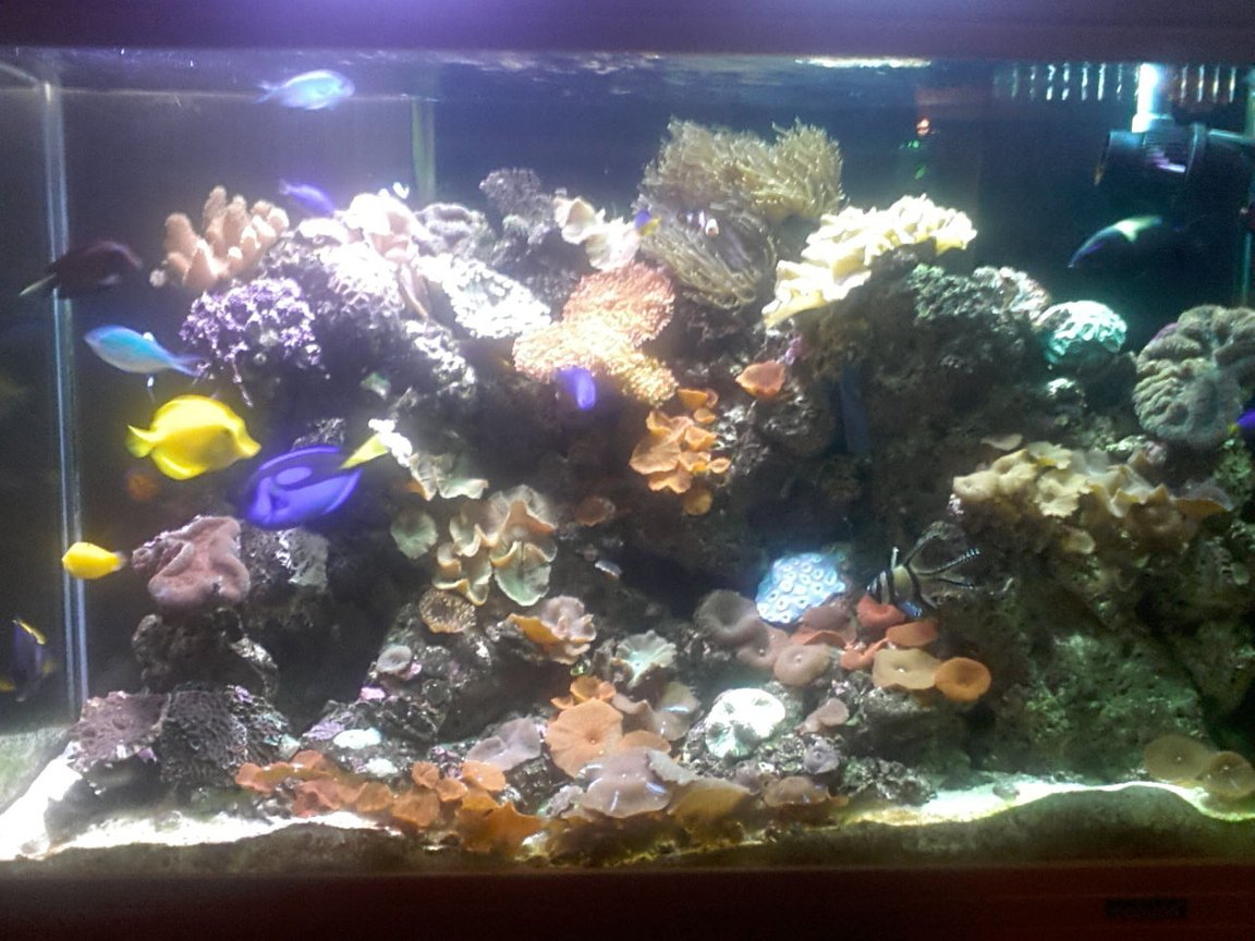 60 gallons reef tank (mostly live coral and fish) - iran