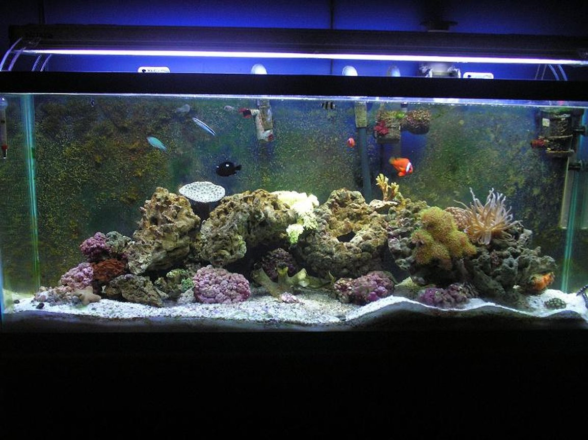 55 gallons reef tank (mostly live coral and fish) - Old Saltwater Tank