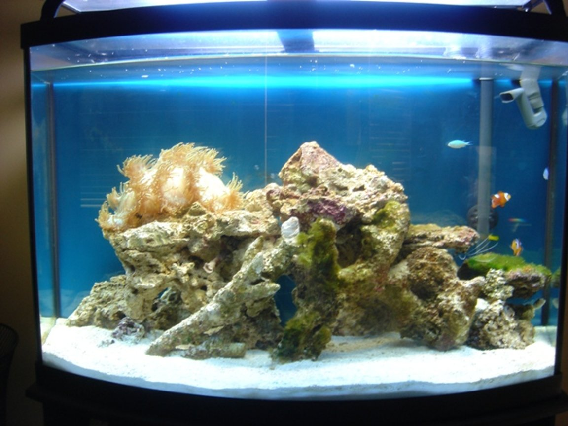 36 gallons reef tank (mostly live coral and fish) - day light tank