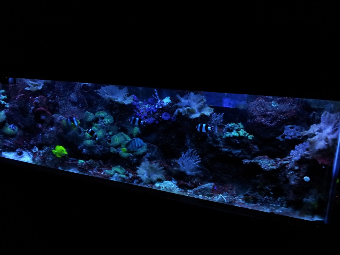 125 gallons reef tank (mostly live coral and fish) - 125 gallon reef aquarium in dusk mode. Aquarium is 72x24x18. 30 gallon sump with SC Aquariums 250 Skimmer and Phosban reactor containing gfo. 8 t5 ho lighting fixture 2 Koralia 650gph powerheads 1 Aquatop 1350gph powerhead