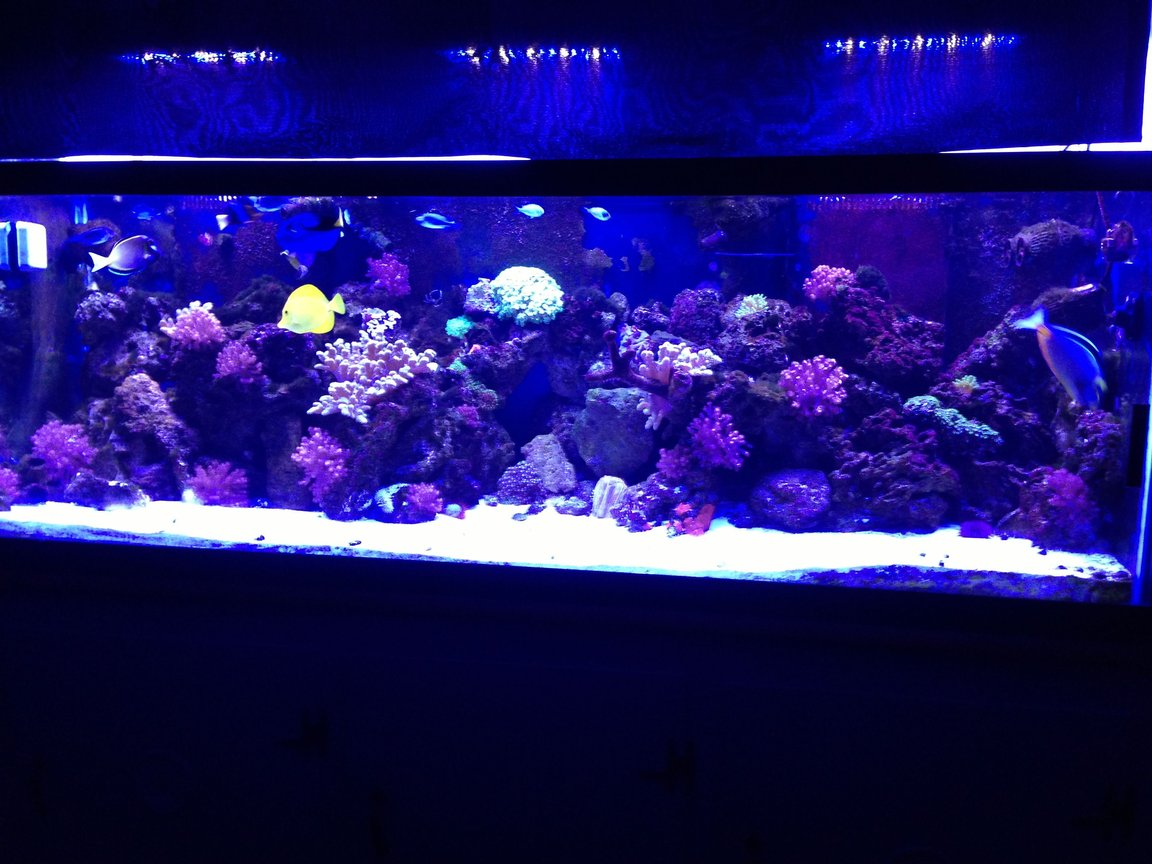 180 gallons reef tank (mostly live coral and fish) - 180 gallon reef tank