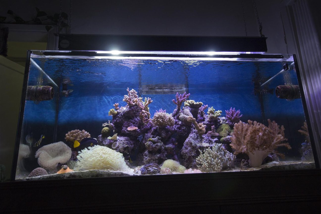 150 gallons reef tank (mostly live coral and fish)