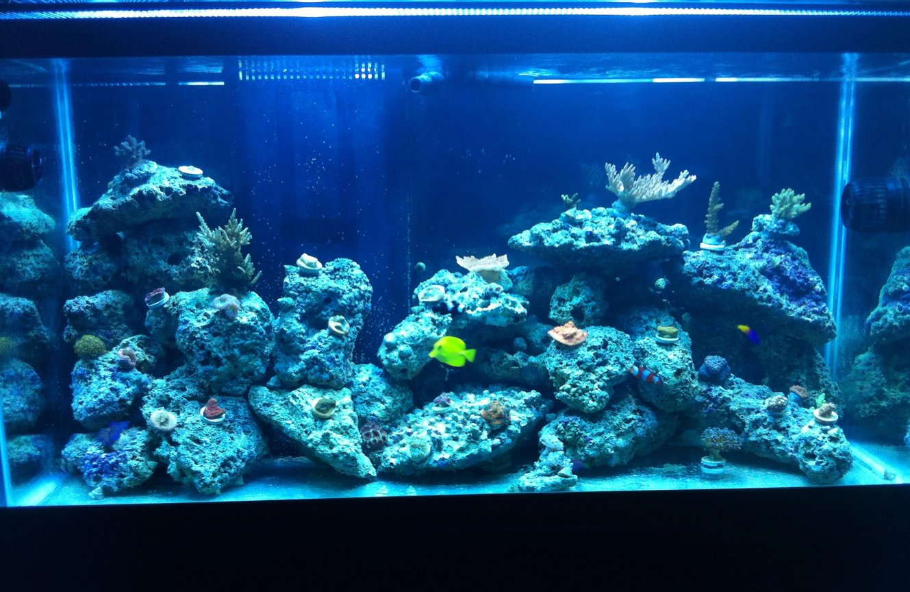 90 gallons reef tank (mostly live coral and fish) - new tank and letting frags grow