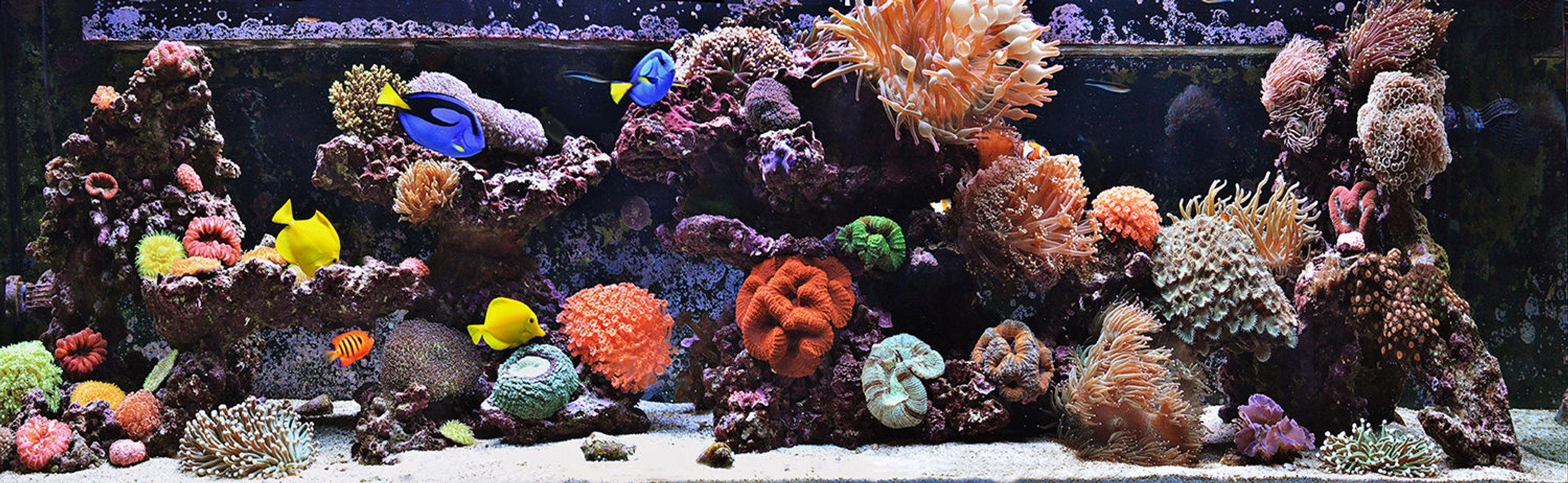 240 gallons reef tank (mostly live coral and fish) - 240g Mixed Reef Tank