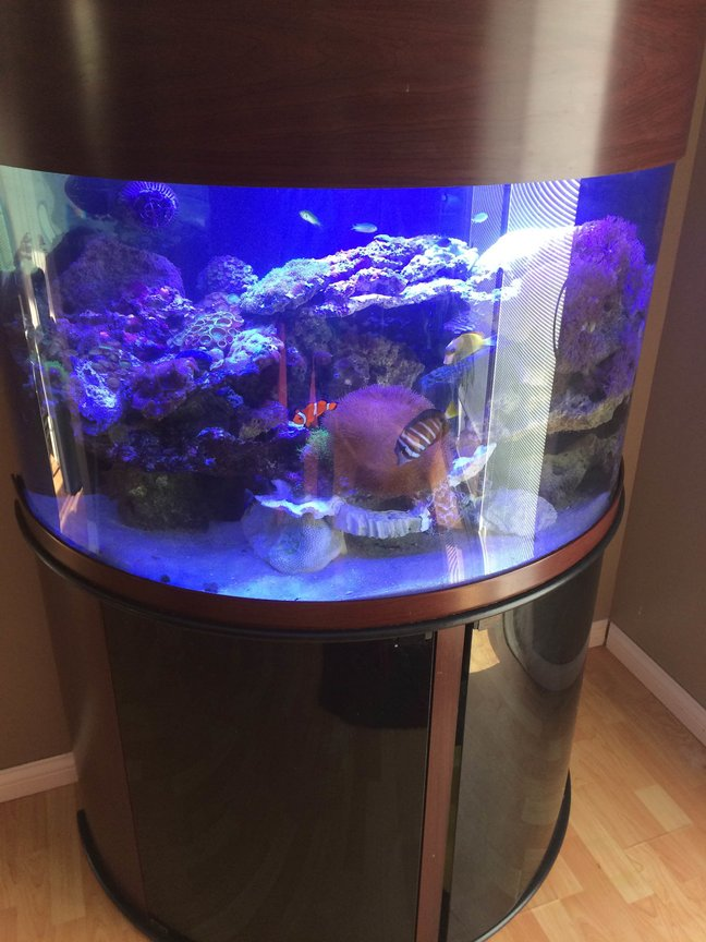 76 gallons reef tank (mostly live coral and fish) - 76 Gallon SemiCircle