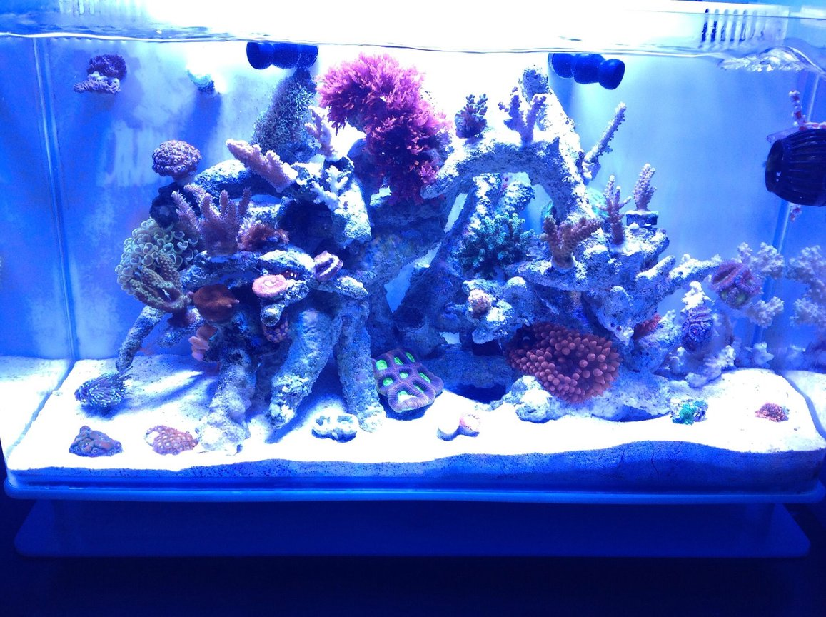 21 gallons reef tank (mostly live coral and fish) - Nuvo 16 gallon , sps dominant, and some lps