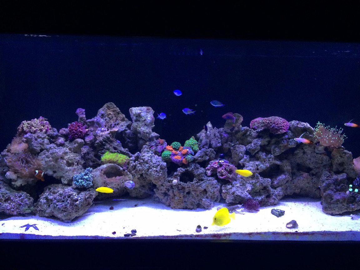 100 gallons reef tank (mostly live coral and fish) - Setup began in November 2014. Current pic as of 3/15/15 which is still a work in progress with adding live rock and growing the existing coral while adding additinal corals time goes by