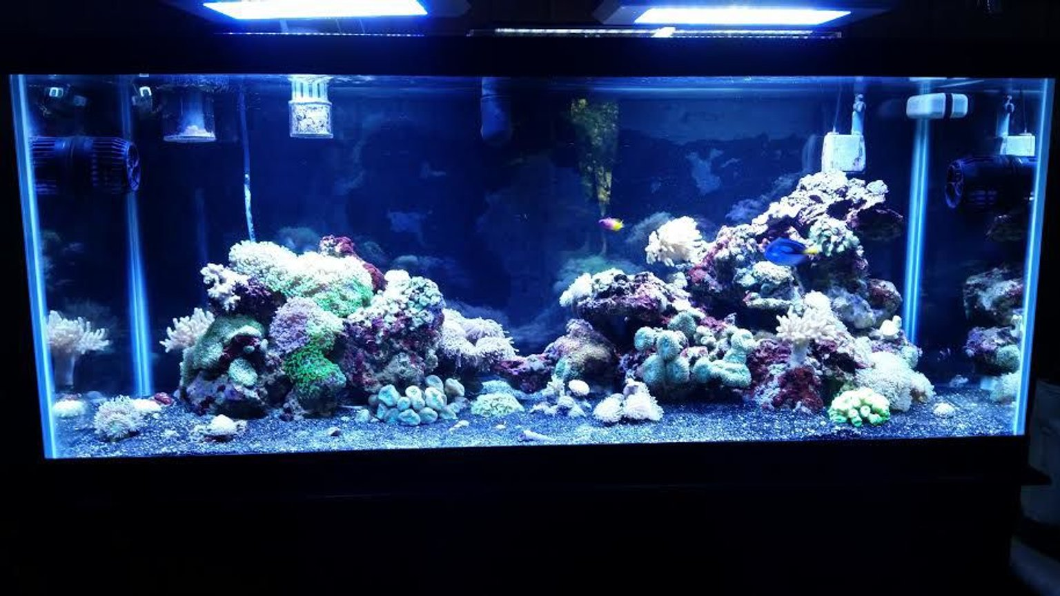 75 gallons reef tank (mostly live coral and fish) - 55g to 75g move