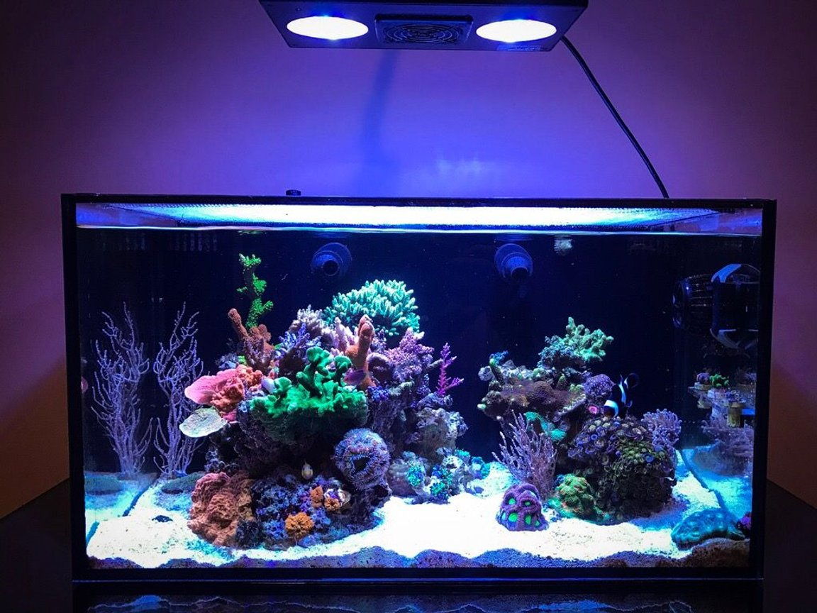 20 gallons reef tank (mostly live coral and fish) - 20 gallons. Full tank shot.