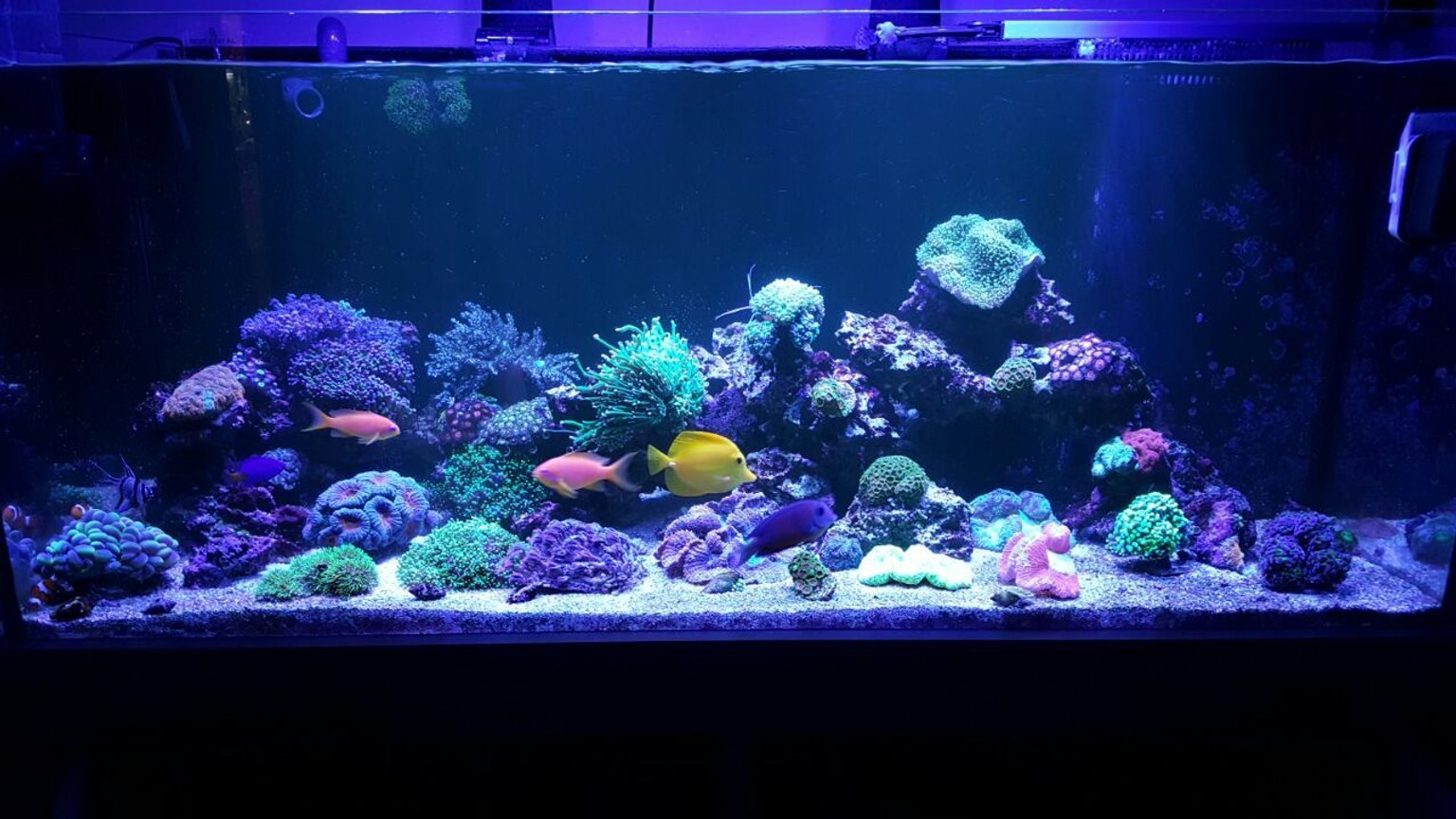 90 gallons reef tank (mostly live coral and fish) - .