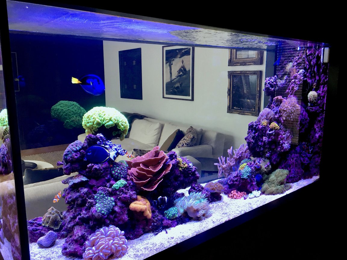 90 gallons reef tank (mostly live coral and fish) - Reef it