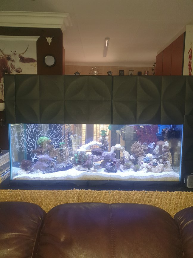 27 gallons reef tank (mostly live coral and fish) - Main display view