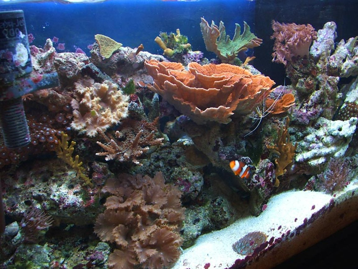 29 gallons reef tank (mostly live coral and fish) - 29 Gallon Tall mixed reef