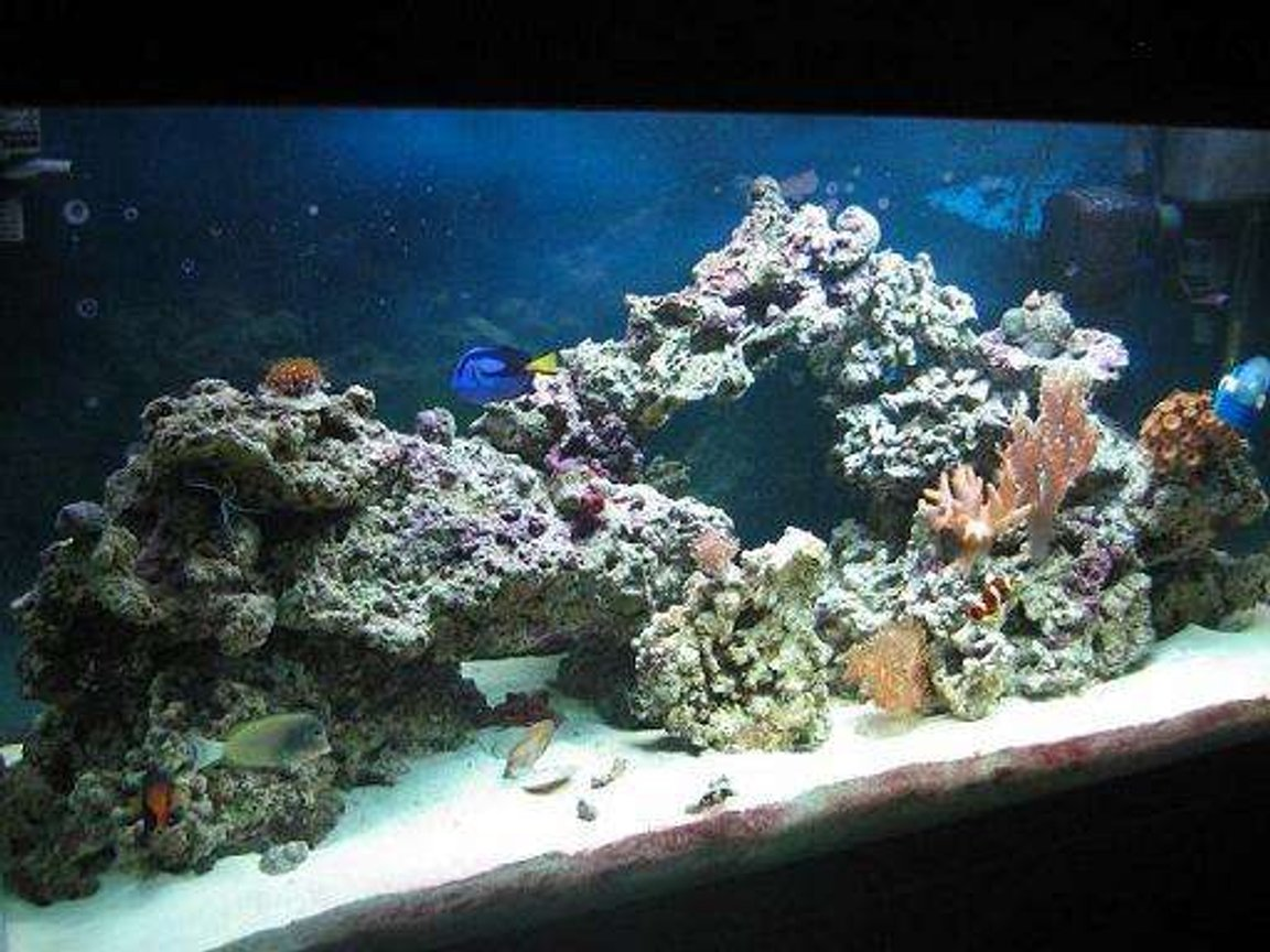 90 gallons reef tank (mostly live coral and fish) - 90 gal reef, 6 months old on a college students salary