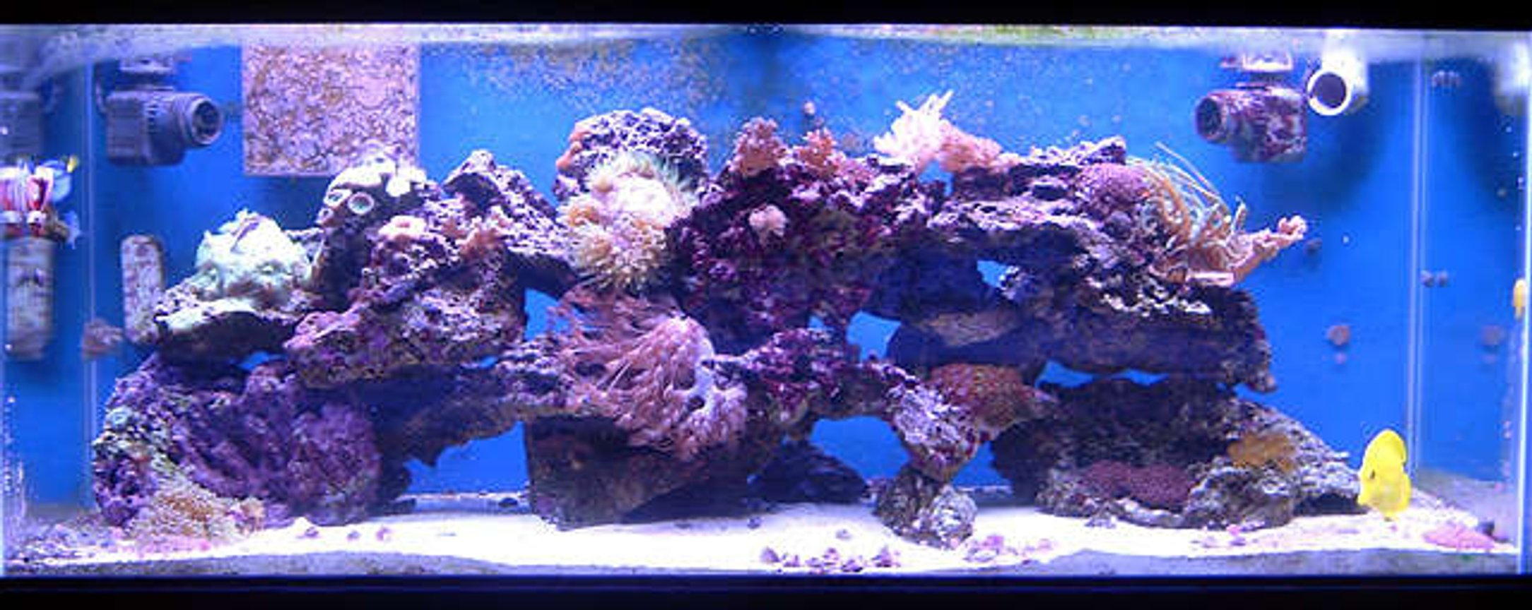75 gallons reef tank (mostly live coral and fish) - My 75g mixed reef tank.