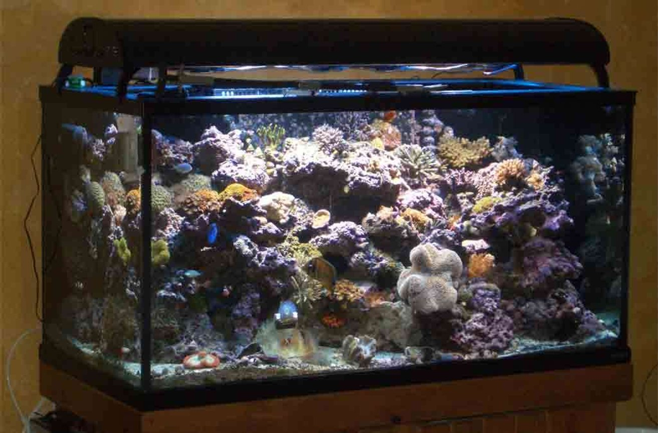 160 gallons reef tank (mostly live coral and fish) - Tank as of 11/29/06 Front angle View