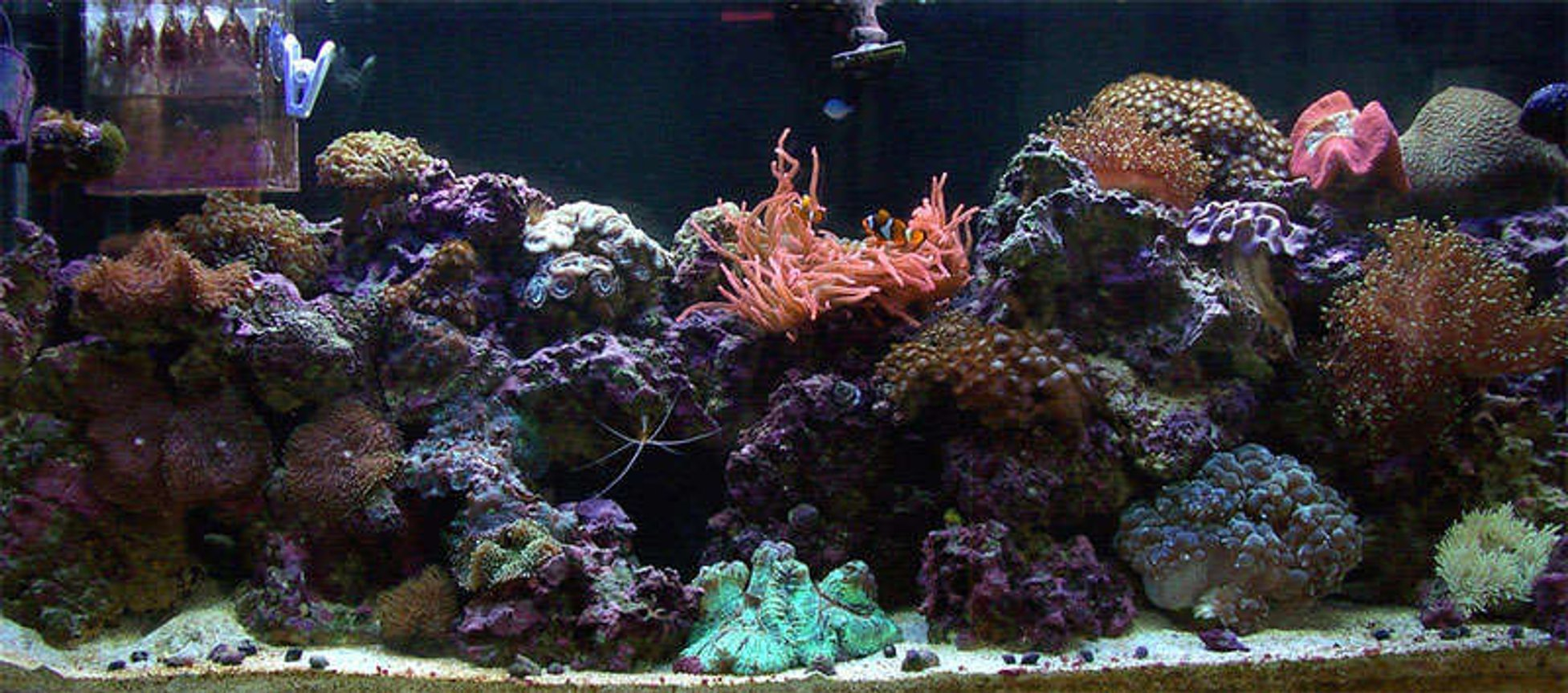 55 gallons reef tank (mostly live coral and fish) - 55gal reef