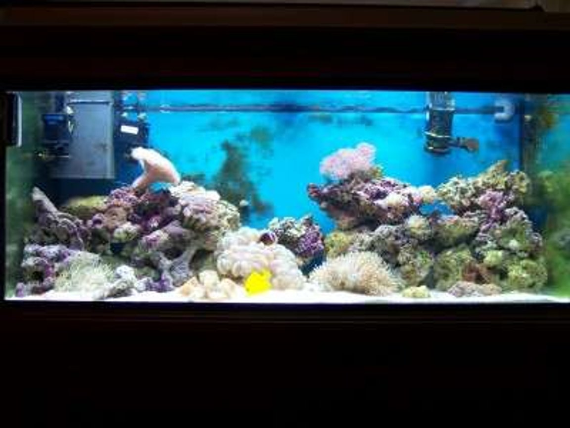 75 gallons reef tank (mostly live coral and fish) - after 4 months
