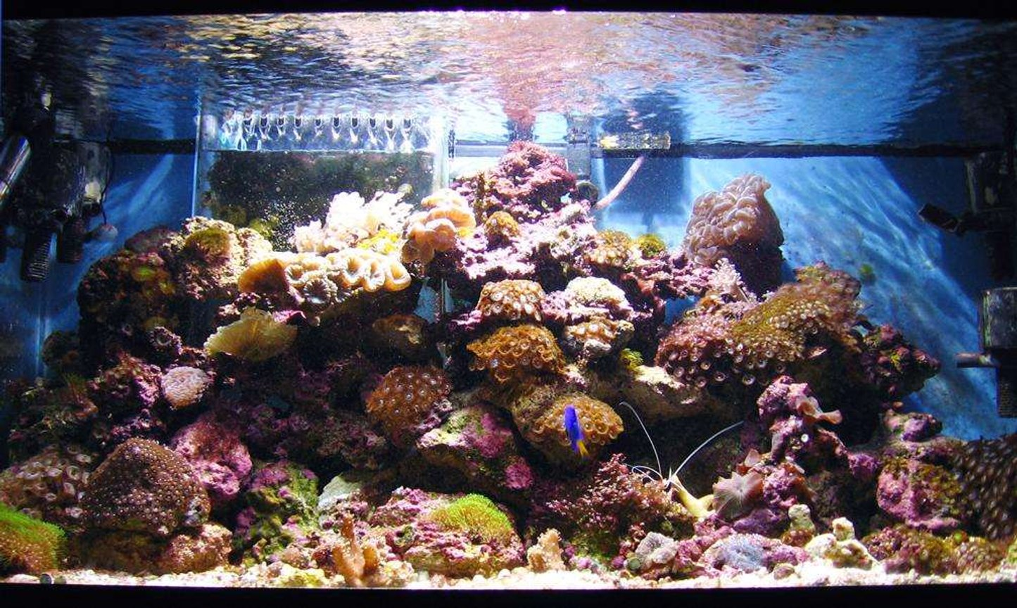 45 gallons reef tank (mostly live coral and fish) - 40 Gallon Breeder