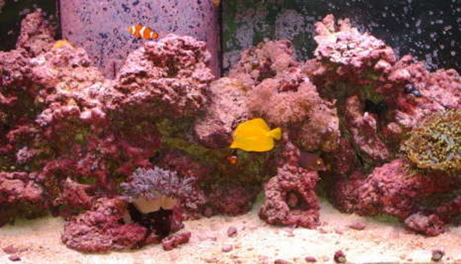 75 gallons reef tank (mostly live coral and fish) - my tank