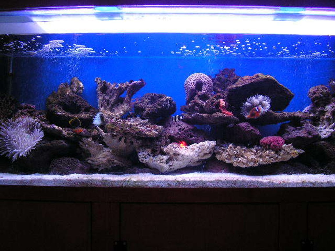 600 gallons reef tank (mostly live coral and fish) - 6ft a few fish and a few coarls have a look for your self
