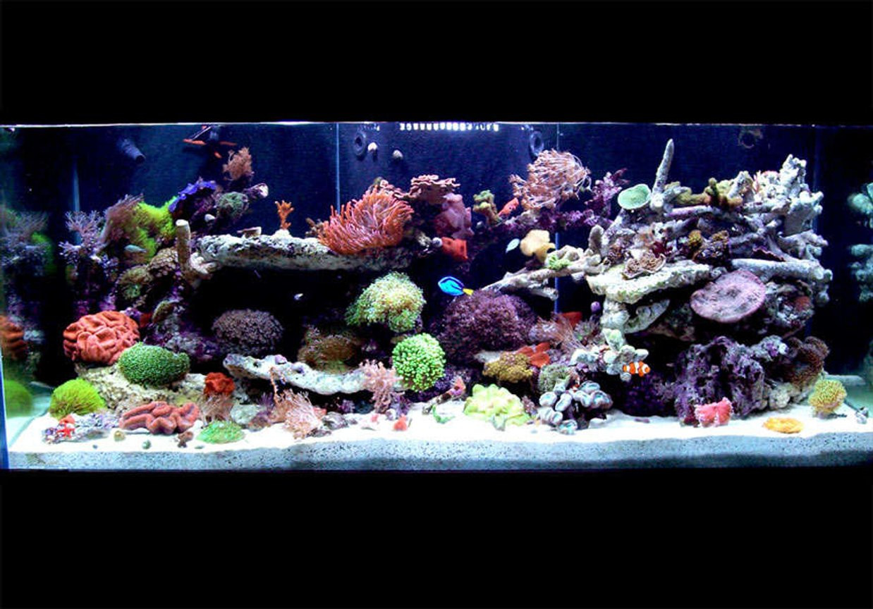 150 gallons reef tank (mostly live coral and fish) - 150 Gallon - full tank shot