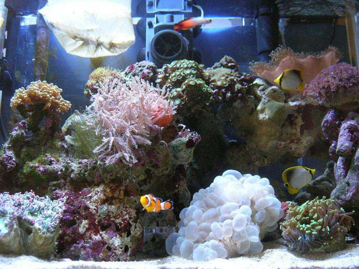 30 gallons reef tank (mostly live coral and fish) - nano reef