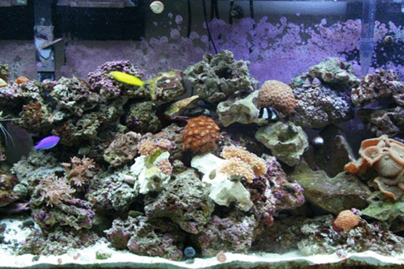 55 gallons reef tank (mostly live coral and fish) - Tank Shot