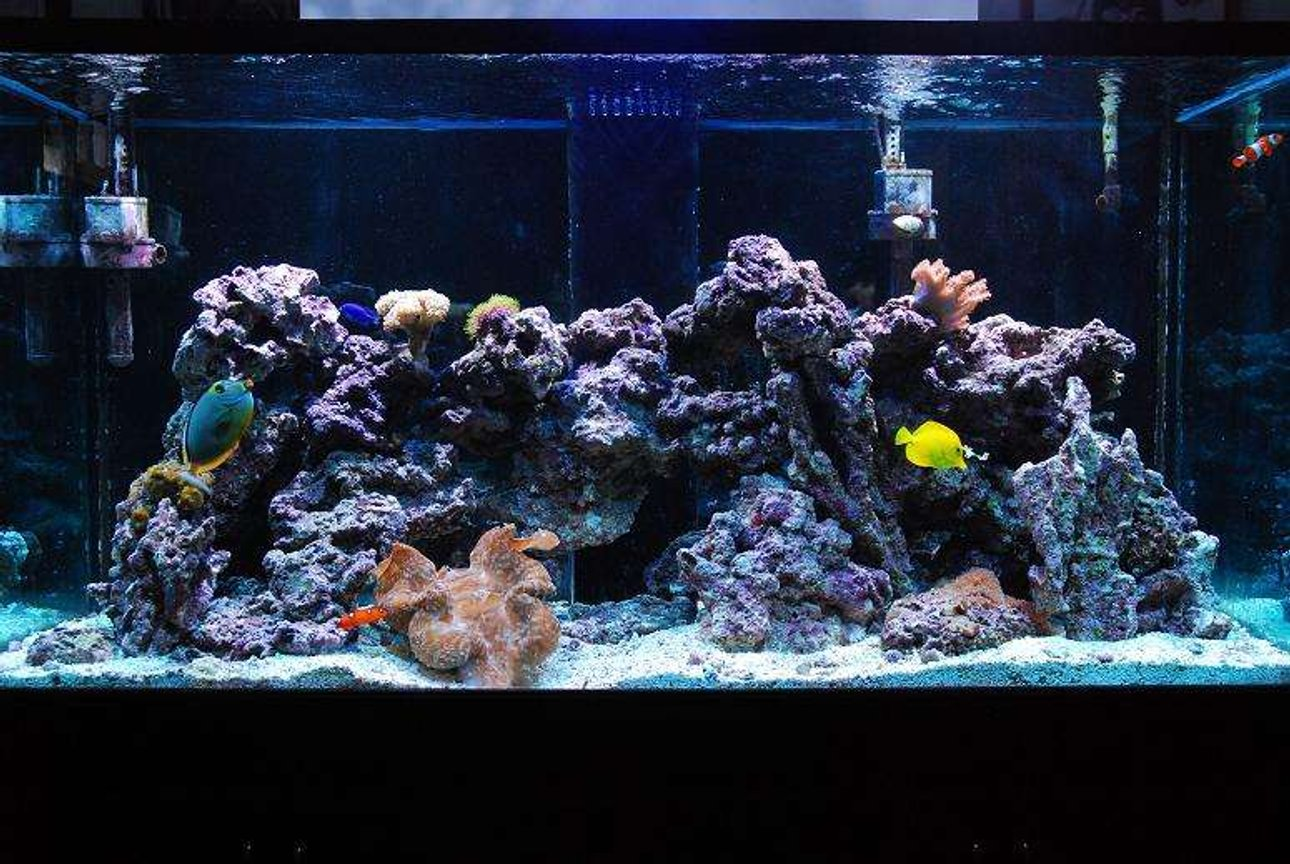 190 gallons reef tank (mostly live coral and fish) - Our tank, all cleaned, fixed, and in good working order! finally