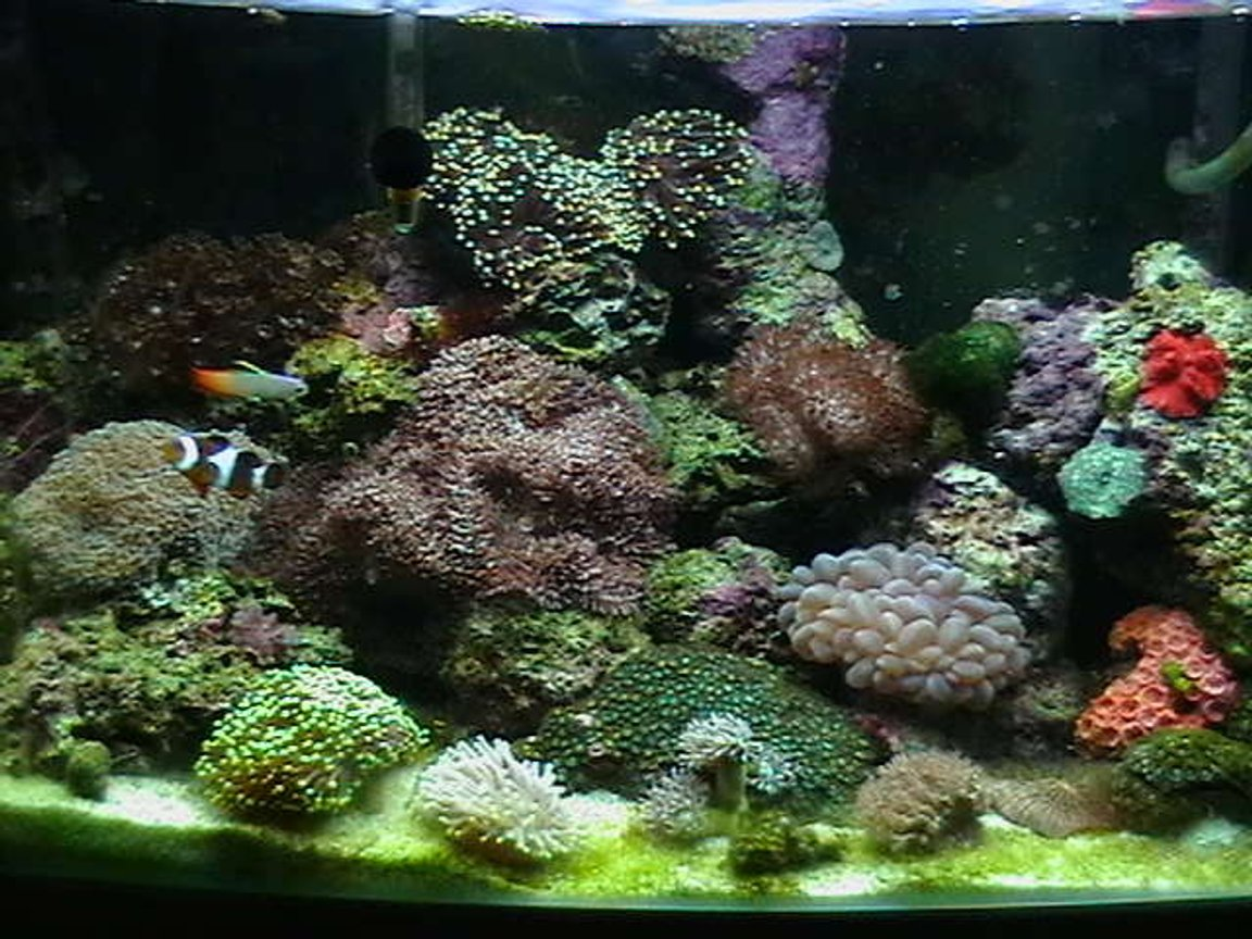 25 gallons reef tank (mostly live coral and fish) - Updated tank shot.