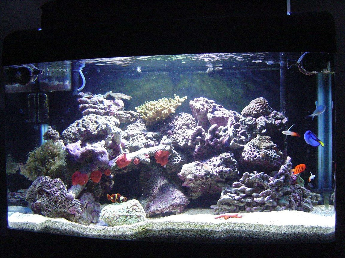 41 gallons reef tank (mostly live coral and fish) - My new reef