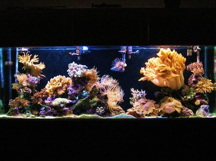 Rated #5: 150 Gallons Reef Tank - my 150 gallon
