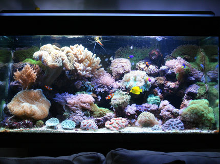 Rated #8: 110 Gallons Reef Tank - 110g reef