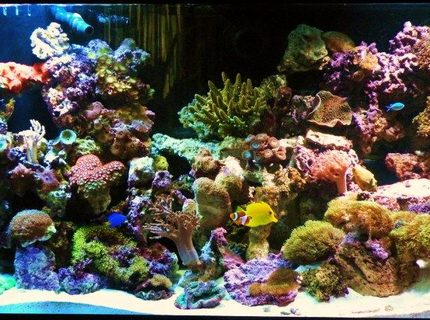 Rated #6: 150 Gallons Reef Tank - My Reef Tank