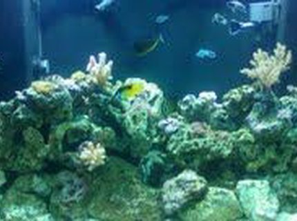 140 gallons reef tank (mostly live coral and fish) - saltwater reek tank 140gal. 5mos. old