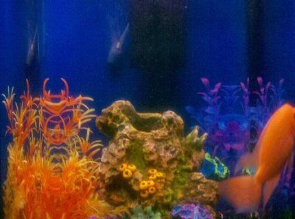 50 gallons reef tank (mostly live coral and fish)