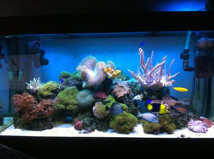 67 gallons reef tank (mostly live coral and fish) - Updated photo 12/3/2013