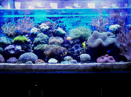 Rated #5: 100 Gallons Reef Tank - 100G Mixed Reef Tank