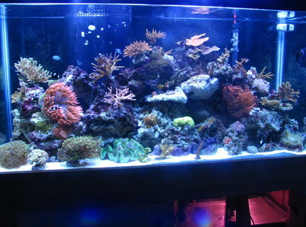Rated #9: 90 Gallons Reef Tank