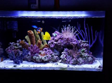 Rated #1: 20 Gallons Reef Tank - New tank setup
