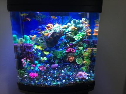 Rated #7: 28 Gallons Reef Tank - Freshwater reef.