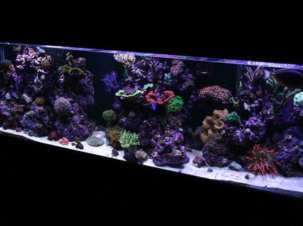 Rated #5: 125 Gallons Reef Tank - 125G Mixed Reef