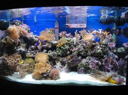 39 gallons reef tank (mostly live coral and fish) - AQUAMARINE 900