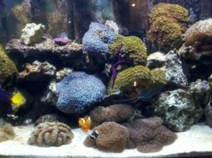 60 gallons reef tank (mostly live coral and fish) - 10 year old reef